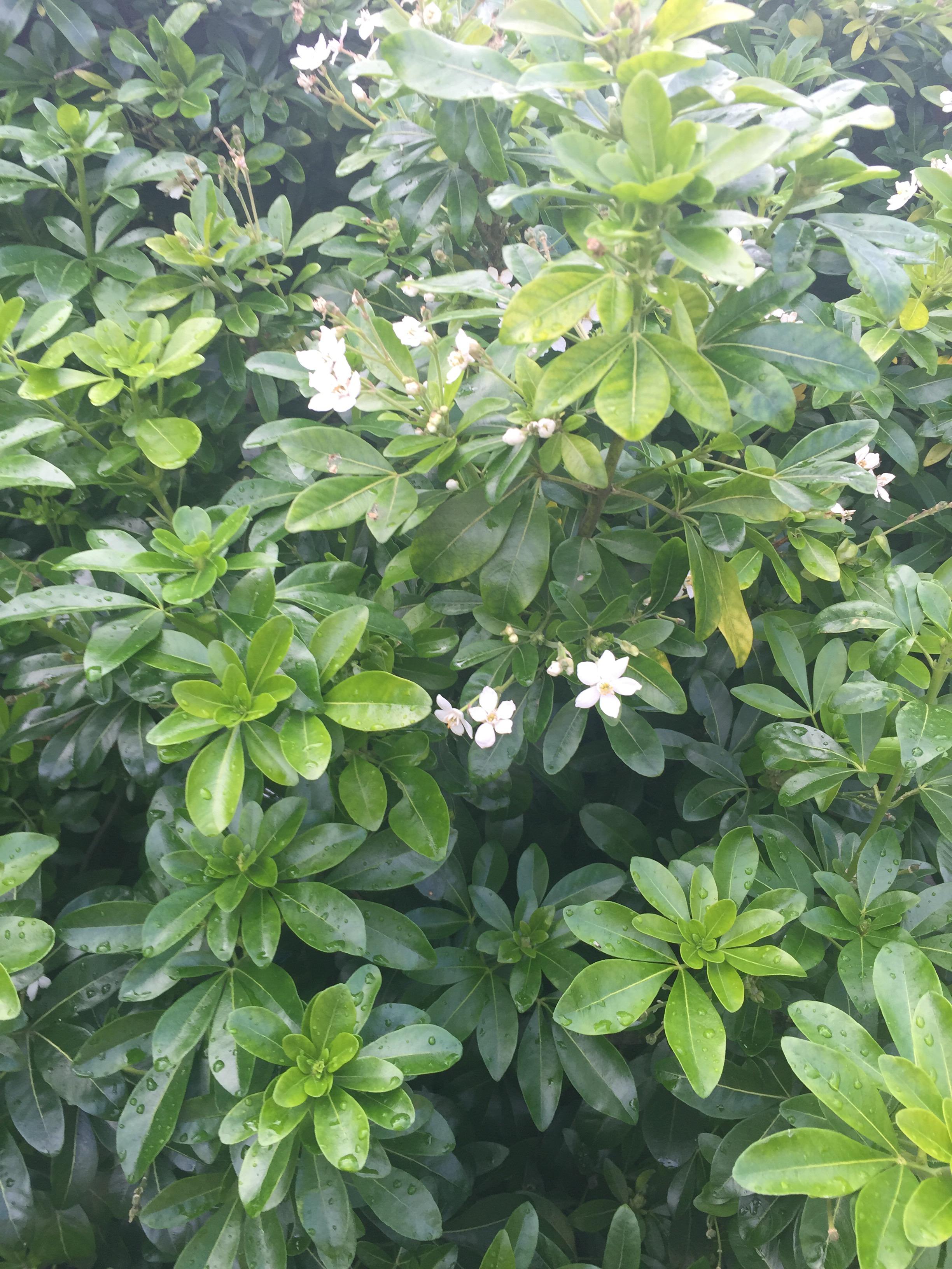 Plant Identification White Flowers Forum Gardenersworld