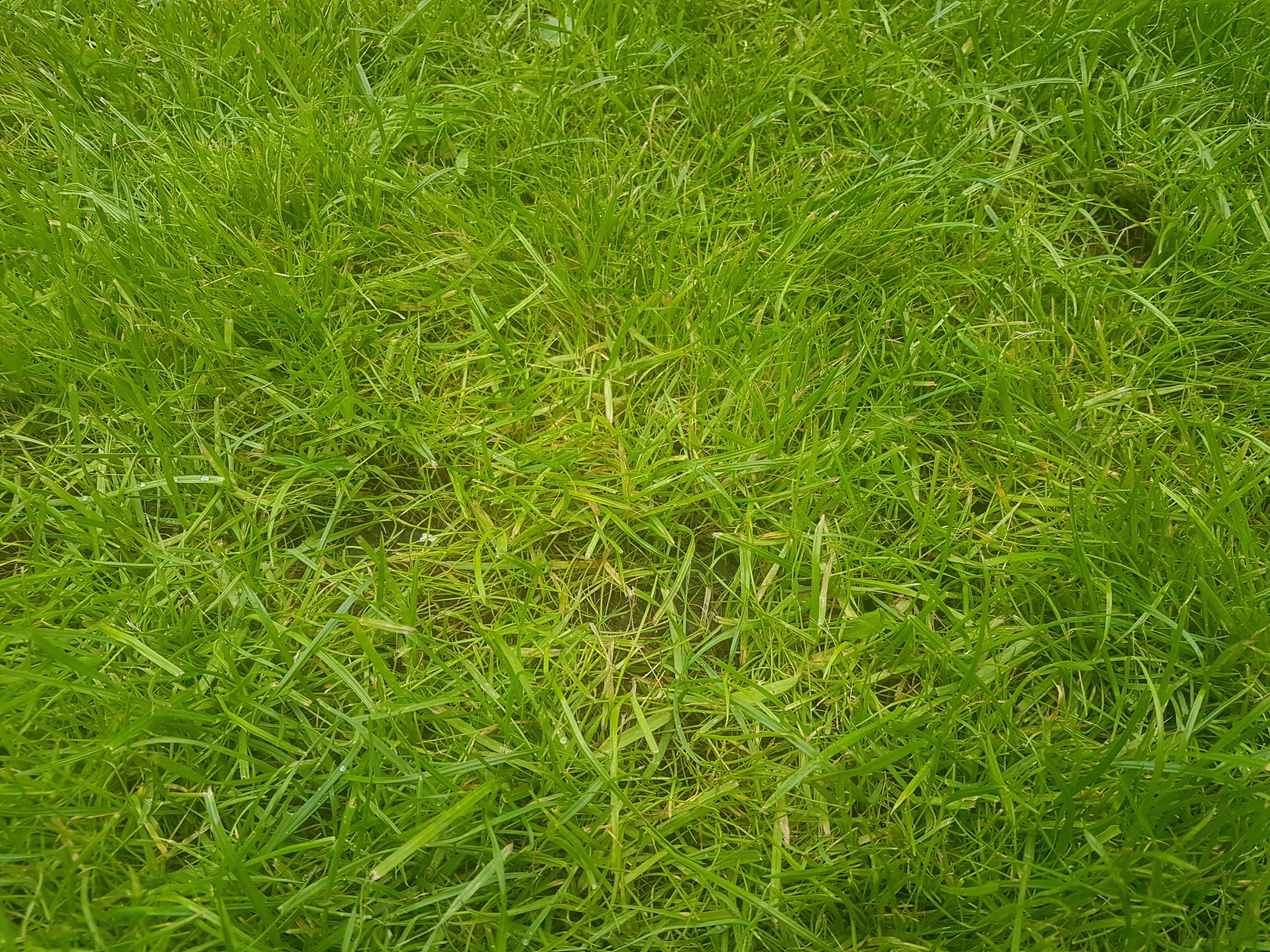New Lawn Changing To Yellow Bbc