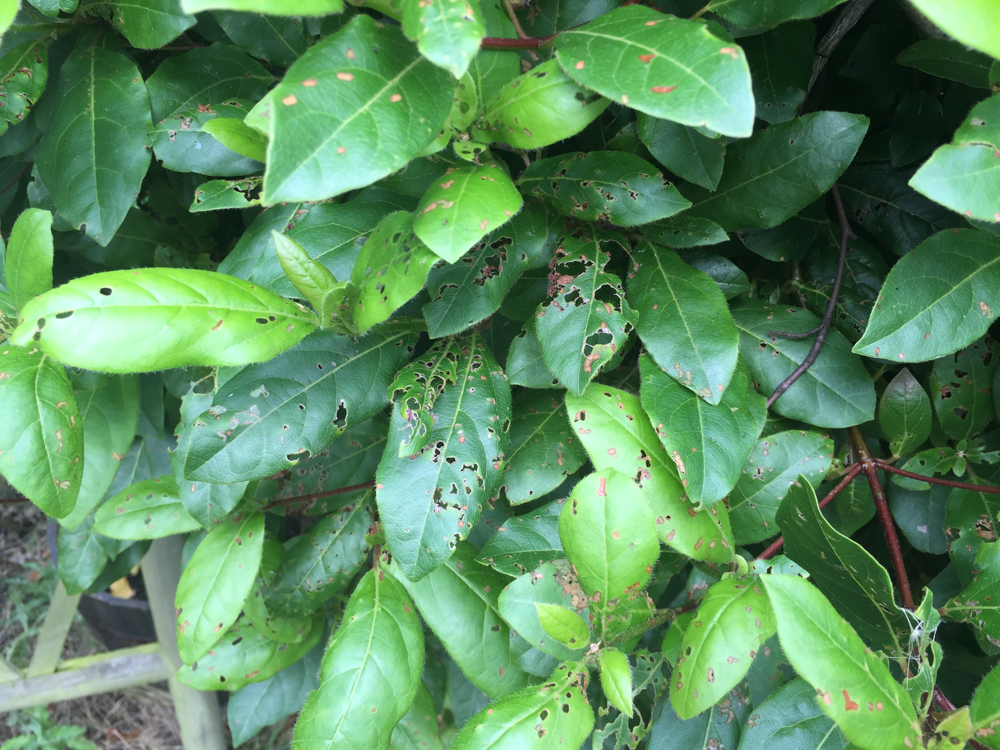 Help My Plants Leaves Are Covered In Tiny Holes Bbc Gardeners