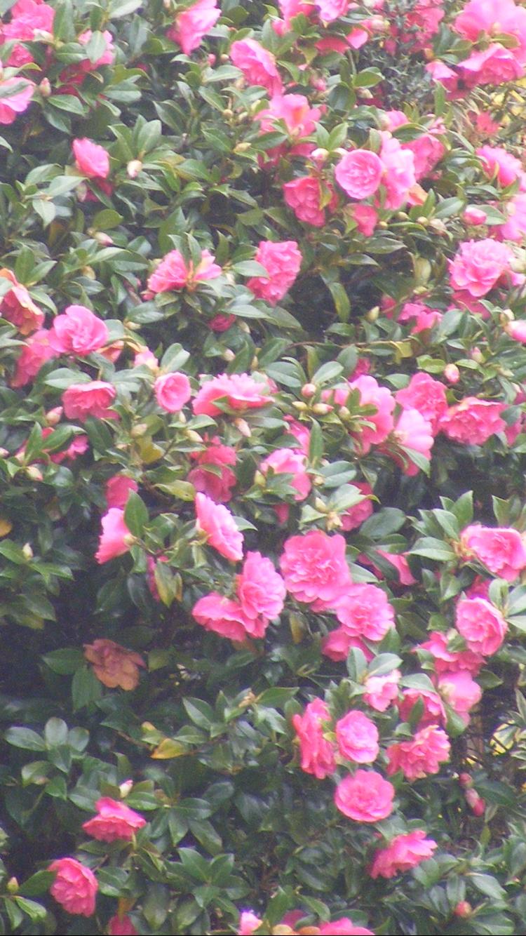 Plant identification please forum gardenersworld image mightylinksfo