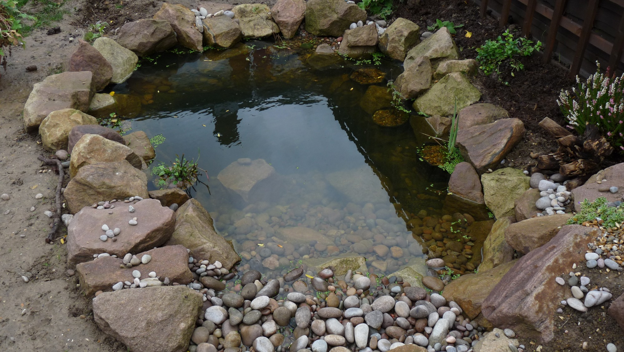 Ponds with rock edging and pebbles forum for Pond shape ideas