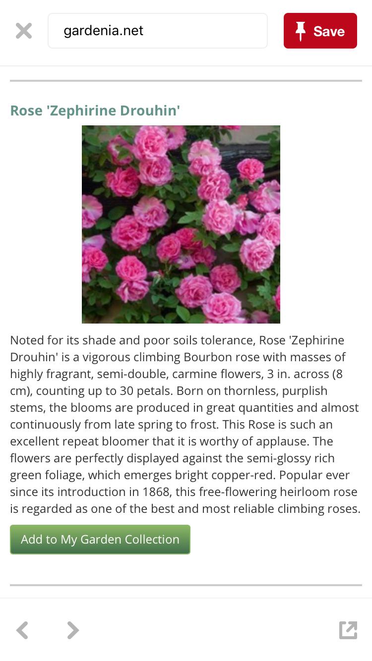 Zephirine Drouhin Climbing Rose climbing rose — bbc gardeners' world magazine