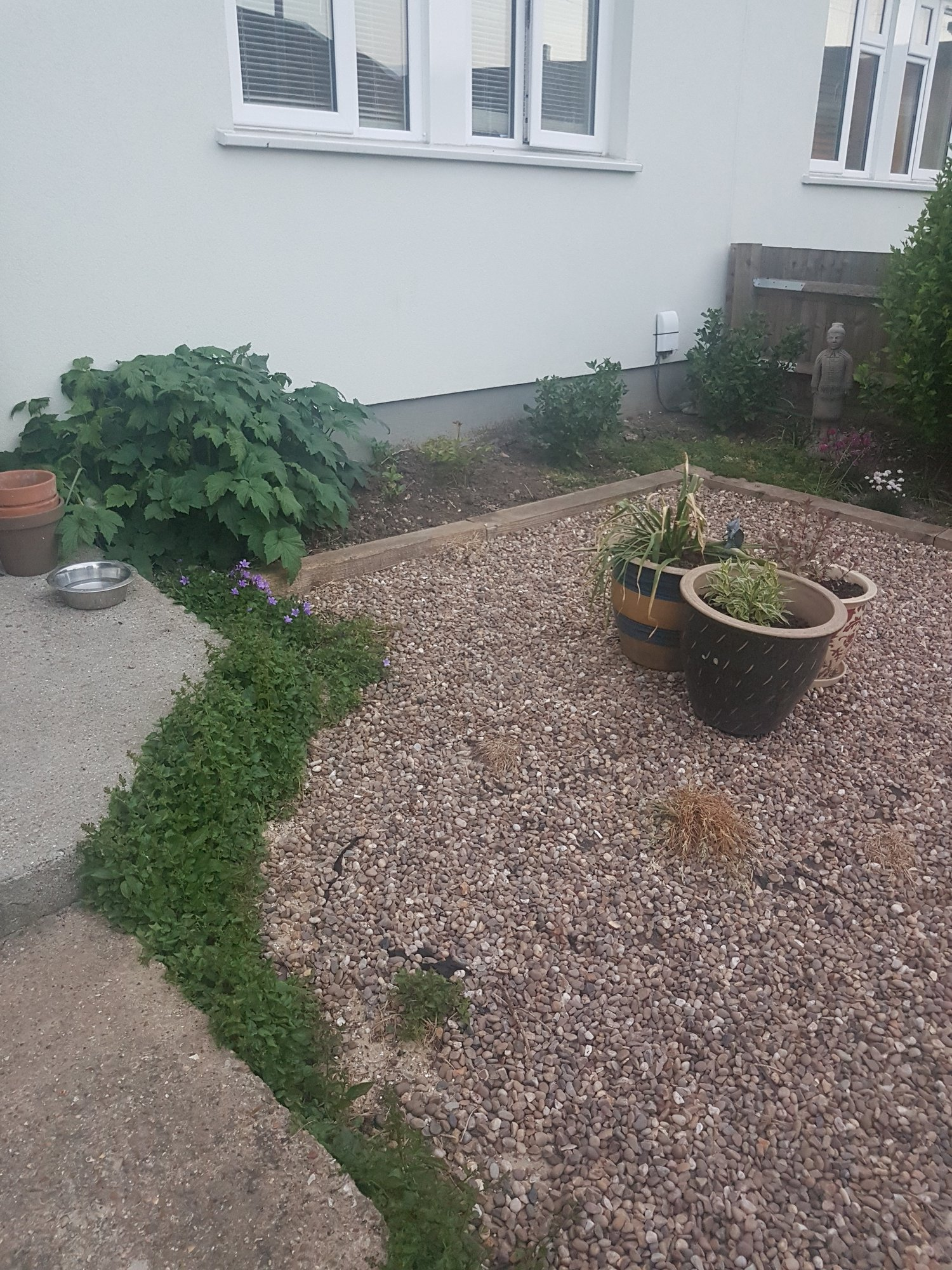 Help with plant placement and garden design ideas — BBC ...