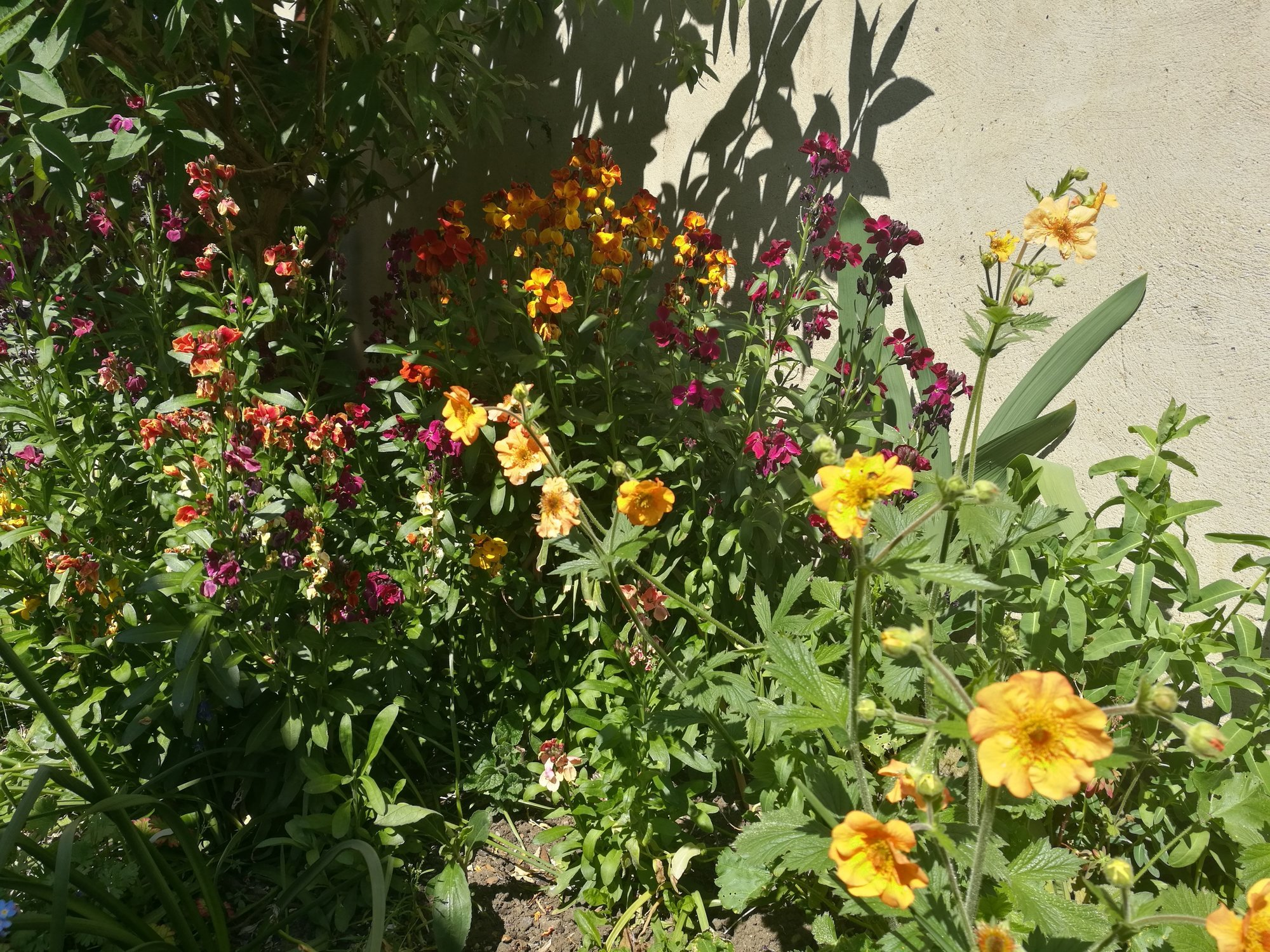 Long Flowering Perennials Page 2 Forum Gardenersworld