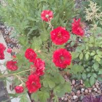 floraltips