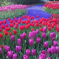 Newbie_gardener