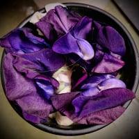 Wild_Violet