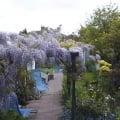 gardeninglily1