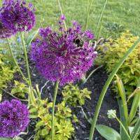 New_to_gardening