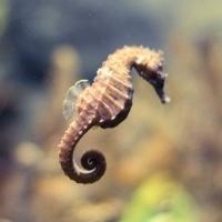 SeahorseFriend