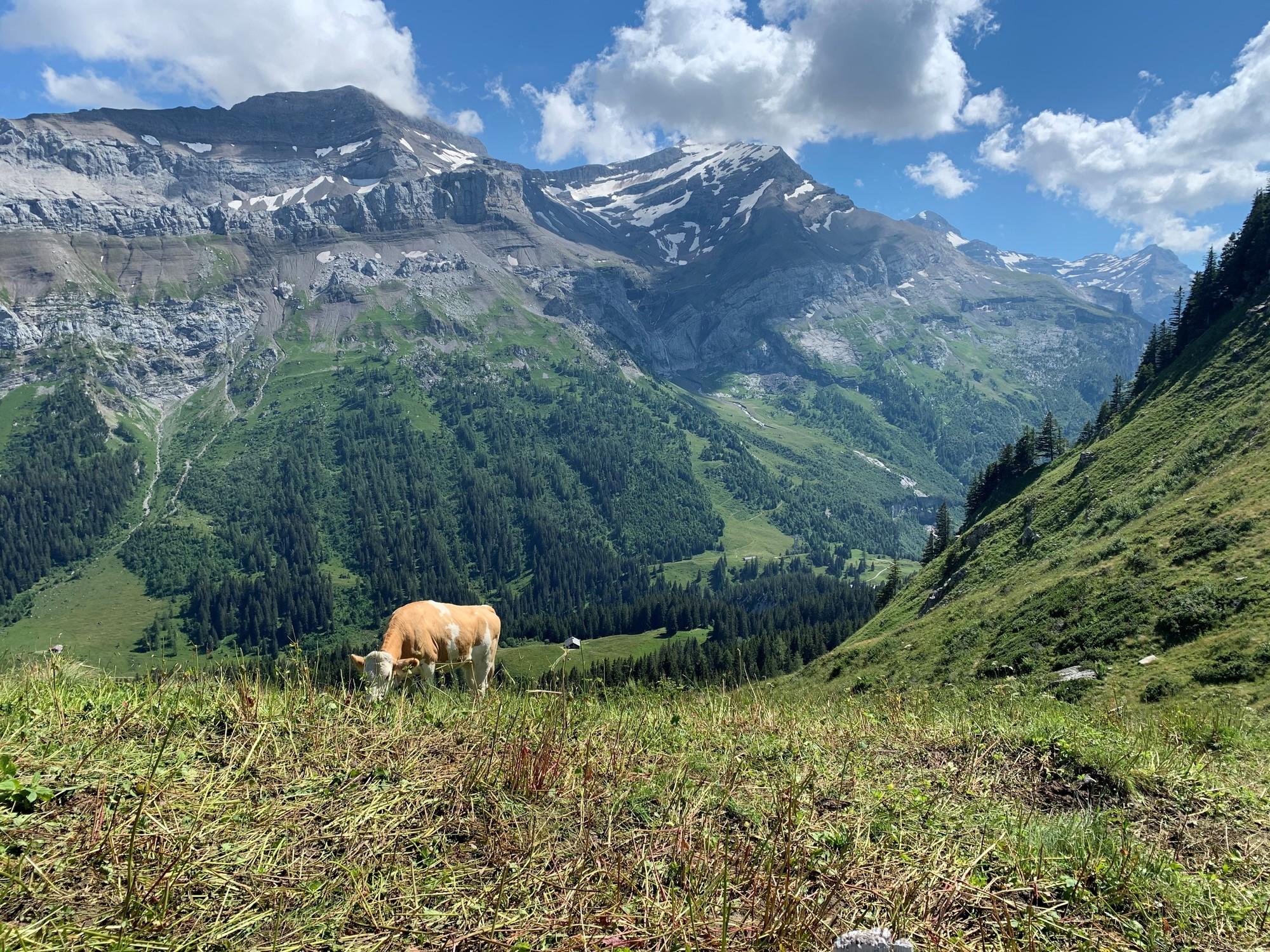Zwitserland.jpg