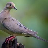 Doves_Indefinitely