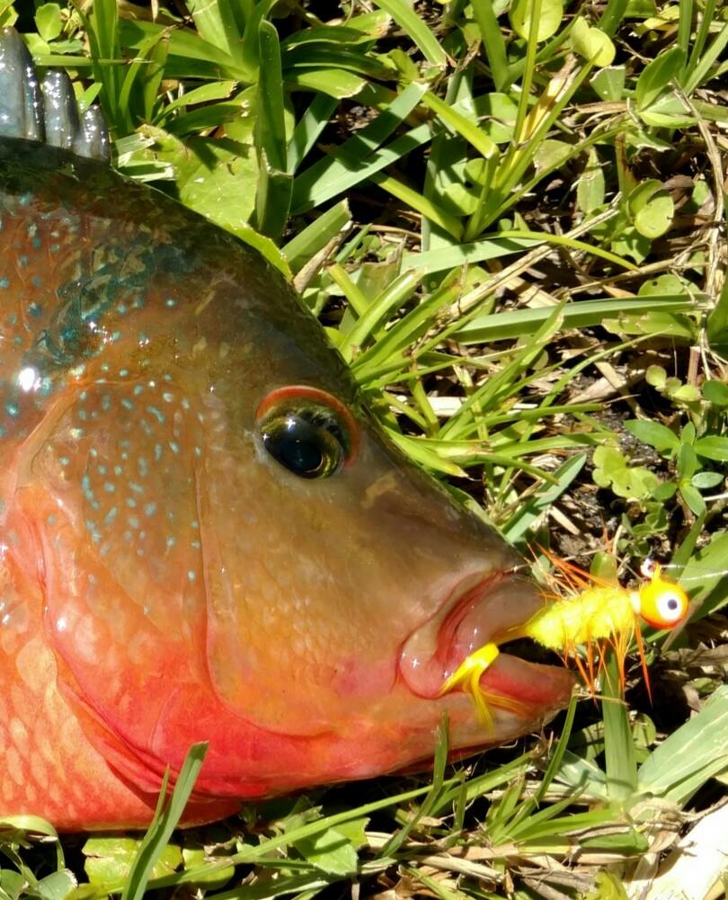 Wild Fish