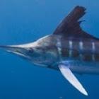 clarkefishing