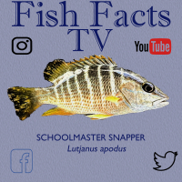 FishFactsTV