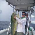 stebfish