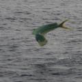 FishNfool