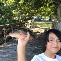 fisheye40