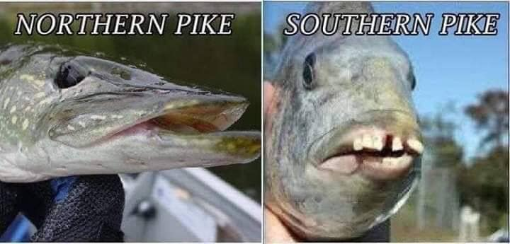 Southern Pike.jpg