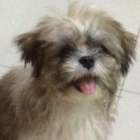DoggieStatus