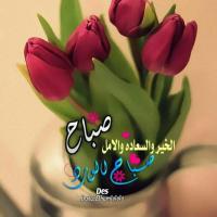 Mona Safwat