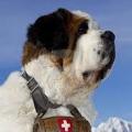 SwissWave