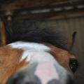 Horselove19