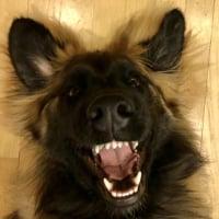 dogdoctor