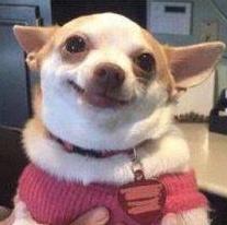 happydog.png