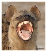 hahaha-the-animal-kingdom-31715584-192-212.jpg
