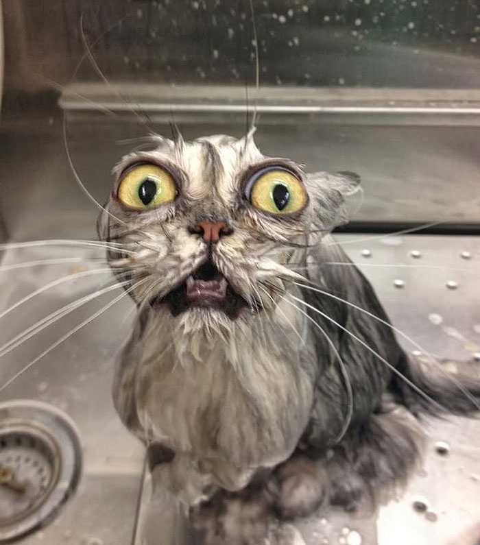 funny-wet-cats-coverimage.jpg