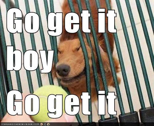 go-get-it-boy-go-get-it.jpeg