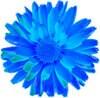 BlueMarigold