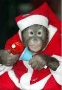monkeychopsmumdrum