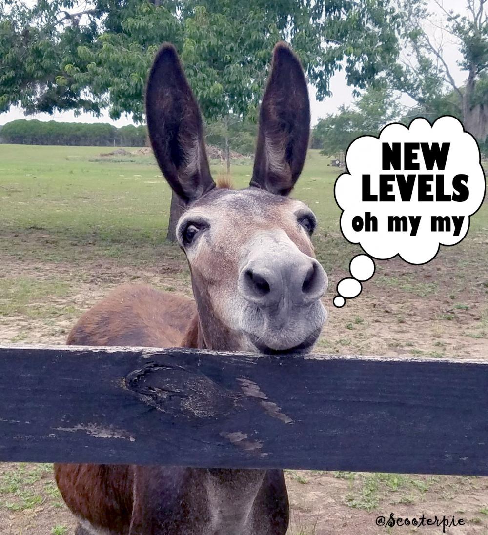 Donkey New Levels.jpg