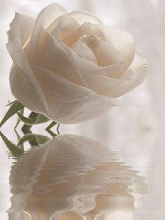 788df07bed80e23c03b86240f585c10c--image-beautiful-beautiful-roses.jpg