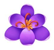Blossom.jpeg