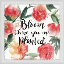 Bloom where you are planted.jpeg