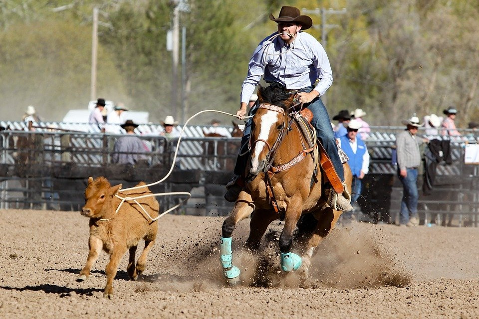rodeo-3578531_960_720.jpg
