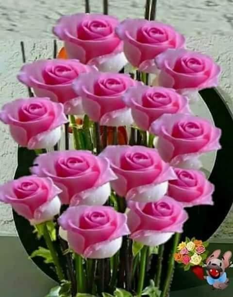 FB_IMG_1589411325252.jpg