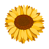 bbs_yellow_bloom small.png