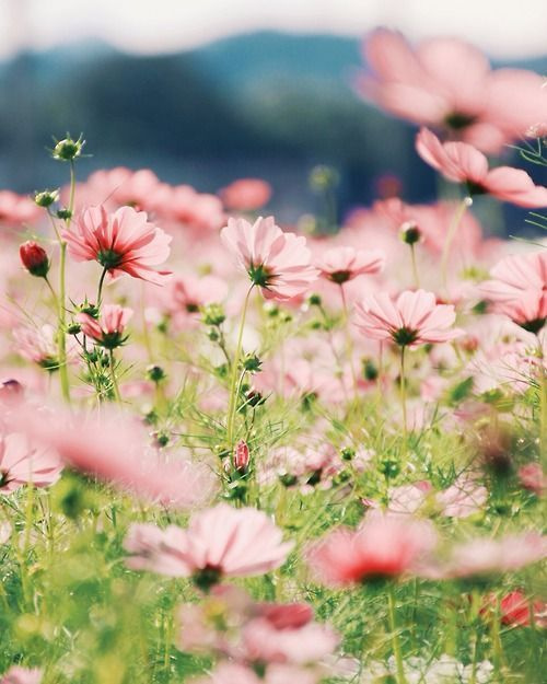 Most-Beautiful-Flowers-In-The-World-11.jpg