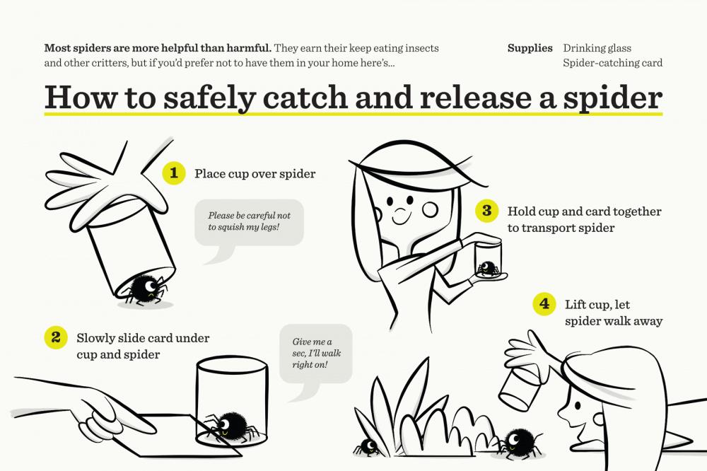SCREEN_SpiderCatcher_Postcard_Front.jpg