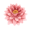 bbs_pink_bloom small.png