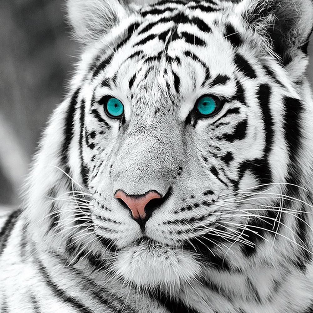 DIY-5D-Full-Diamond-Painting-Cross-Stitch-Painting-White-tiger-Diamond-Embroidery-Needlework-Patterns-Rhinestone-kits_1000x.jpg