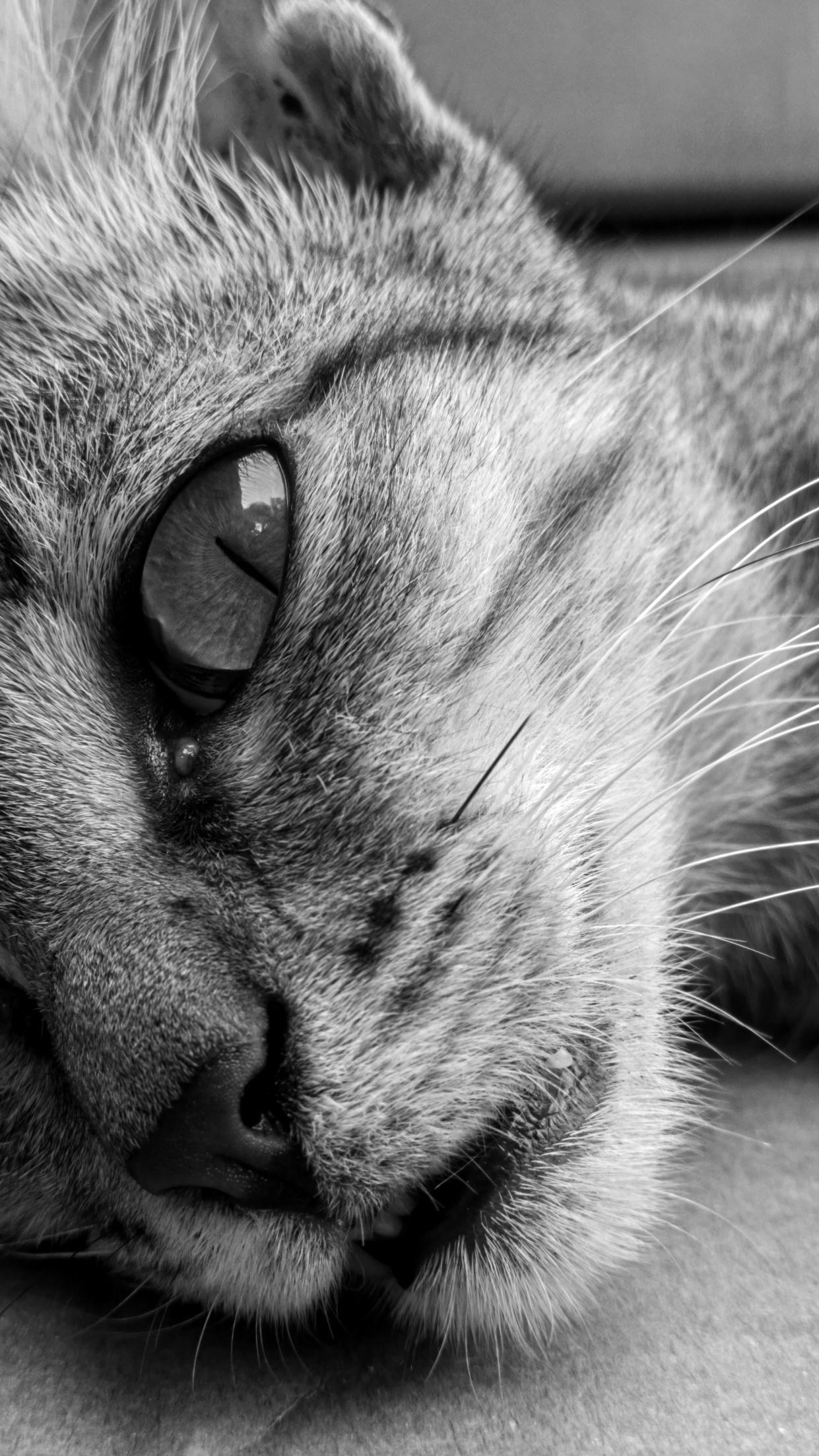 Meow - N9PV B&W.jpg