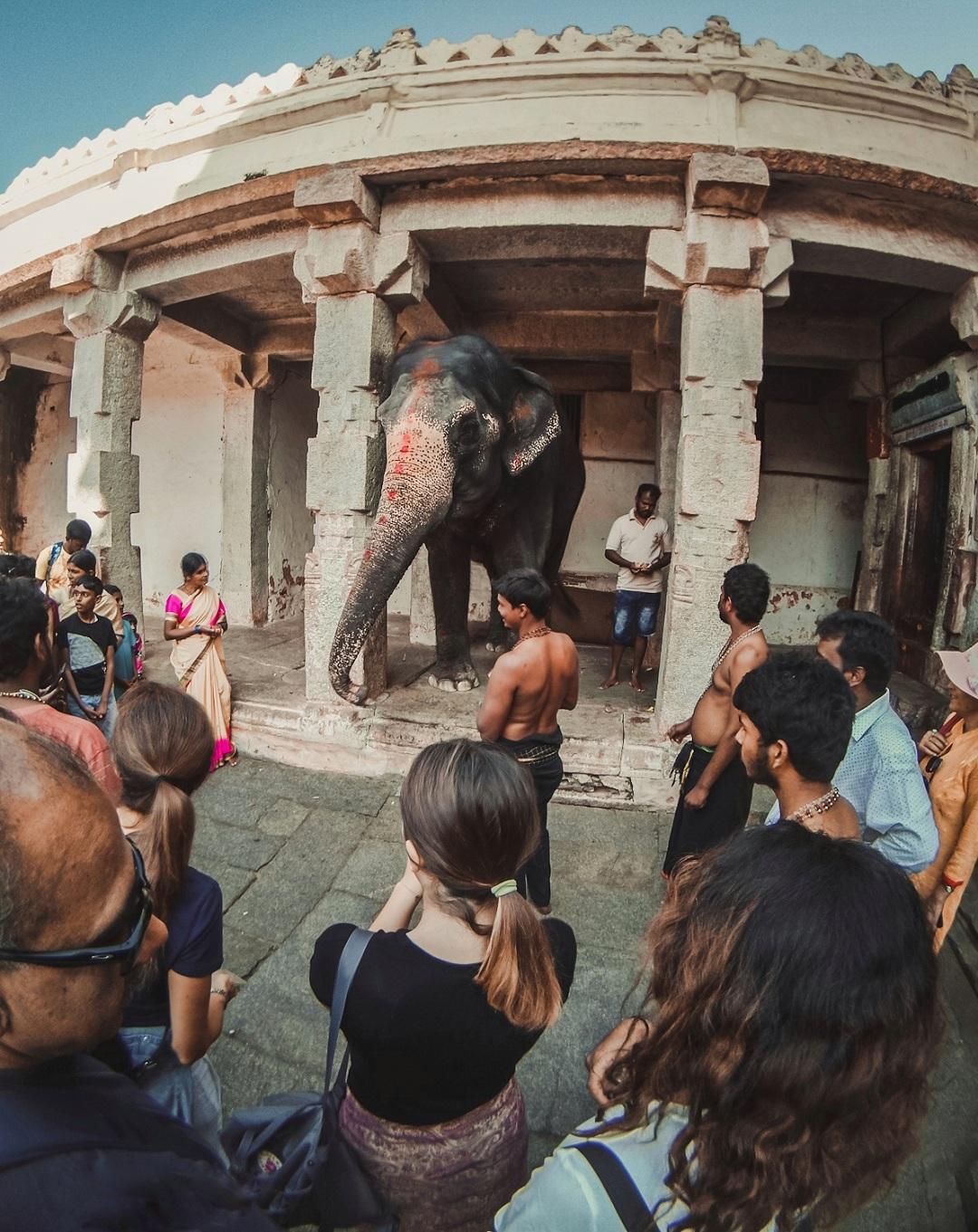 11laxmi elephant.jpeg