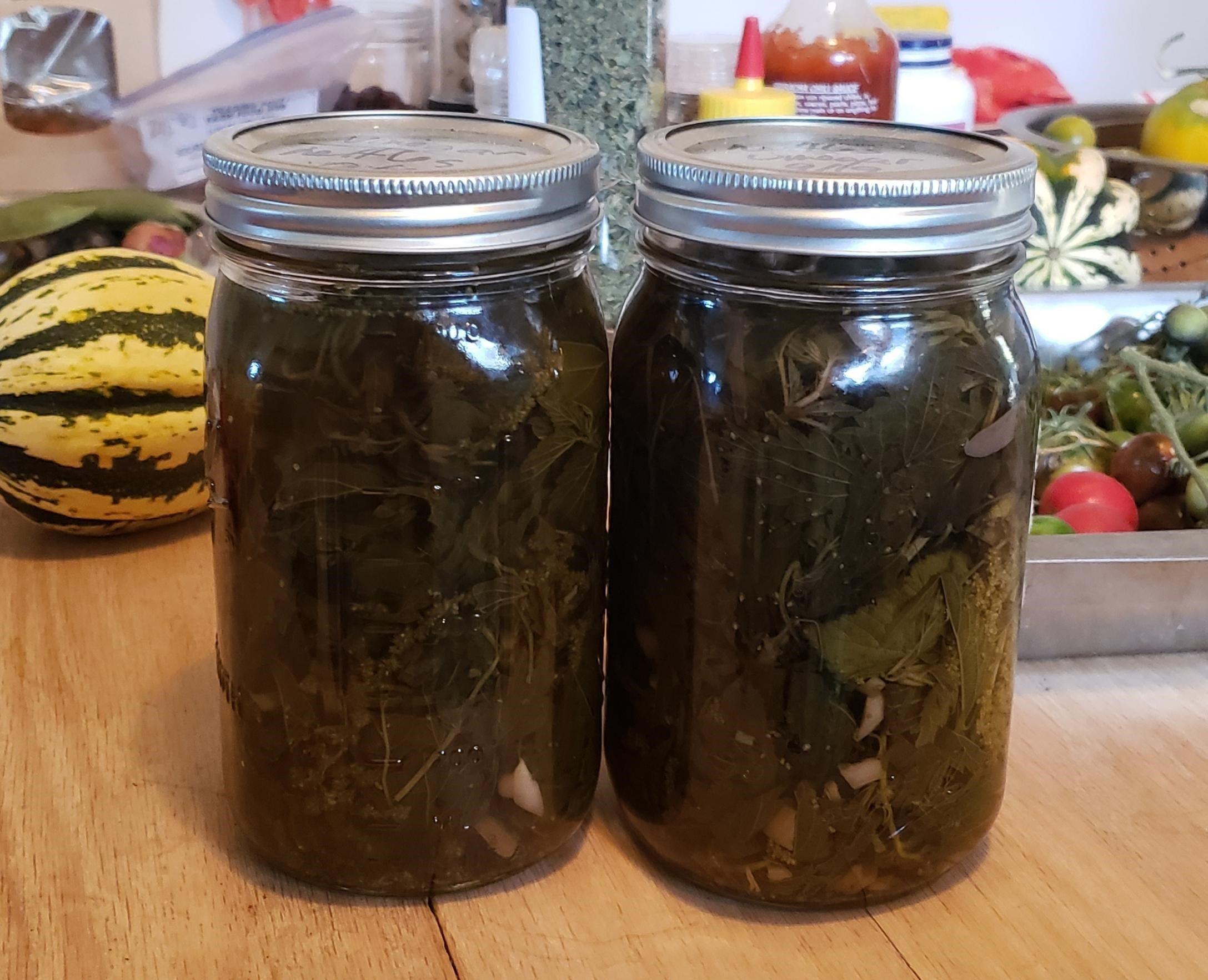 two jars of nettle vinegar.jpg