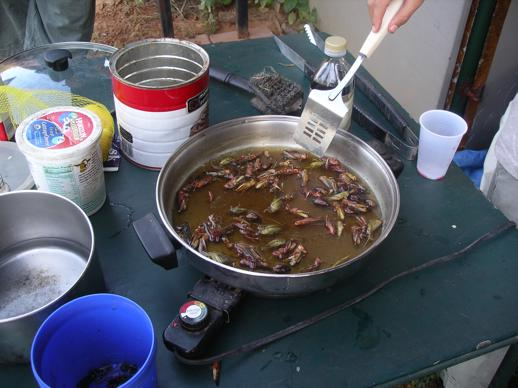bug fest skillet with grasshoppers-518x388.JPG