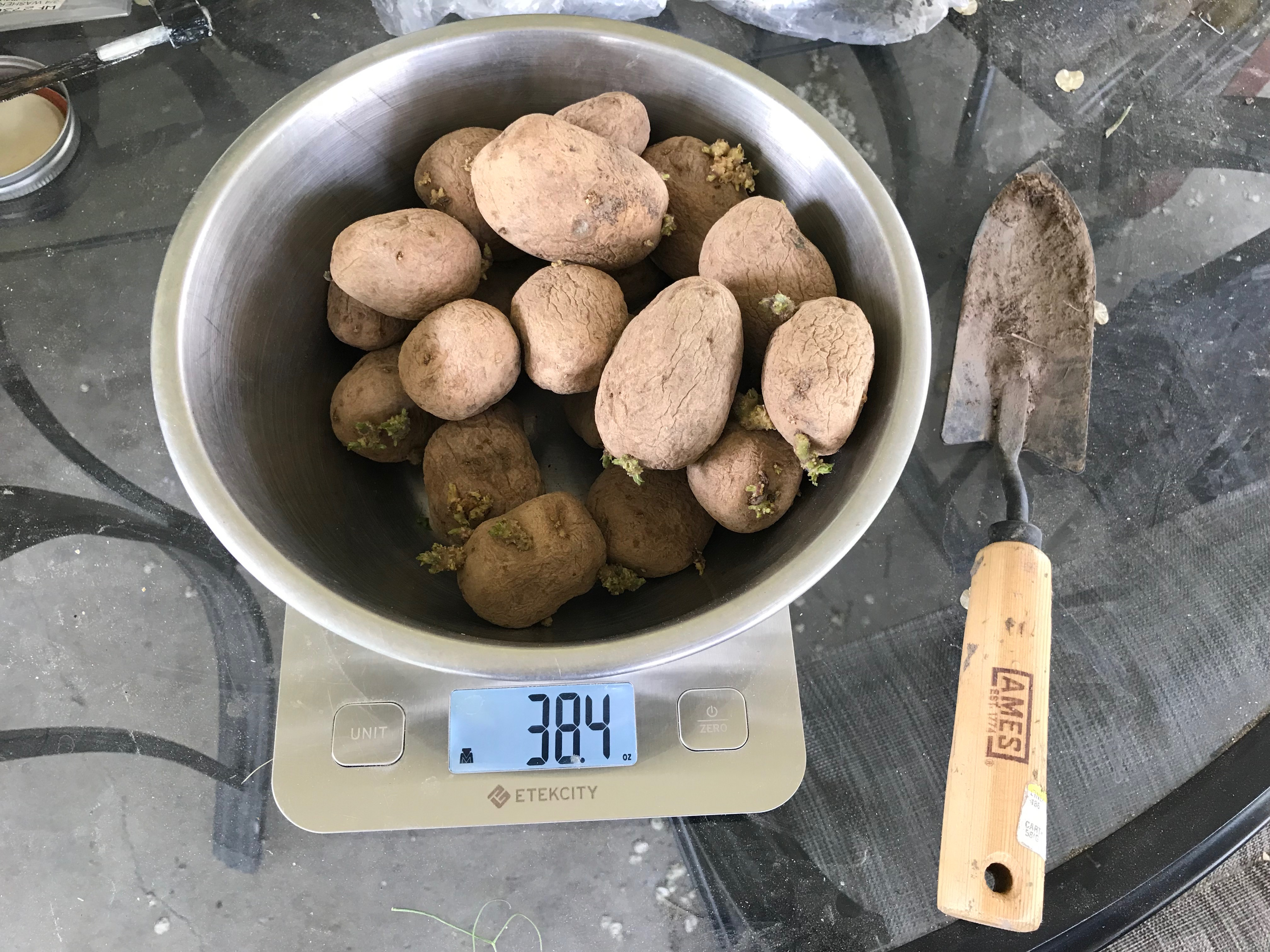 2019 05 18 potatoes to be planted.jpeg